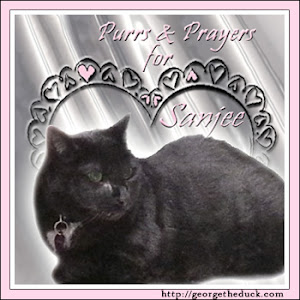 Purrs for Sanjee