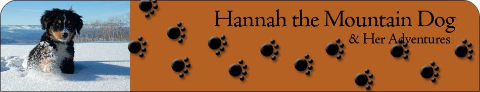 Hannah's Dog Blog