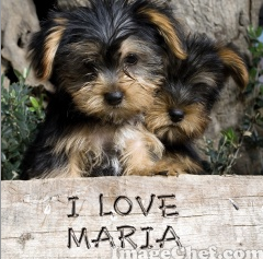 I love maria