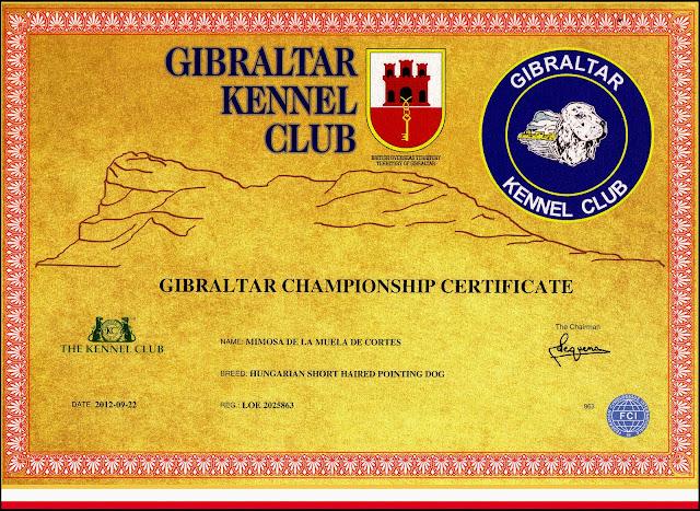 Título Campeona de Gibraltar, Vizsla Mimosa de La Muela de Cortes