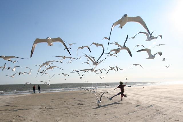 صور خلفيات طيور جميلة جدا طيور قمة في الروعة