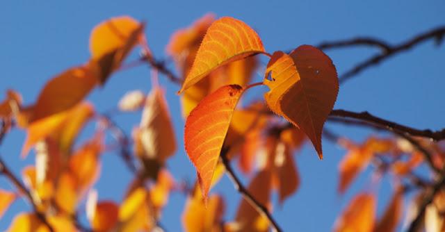 Efterårets farver i haven
