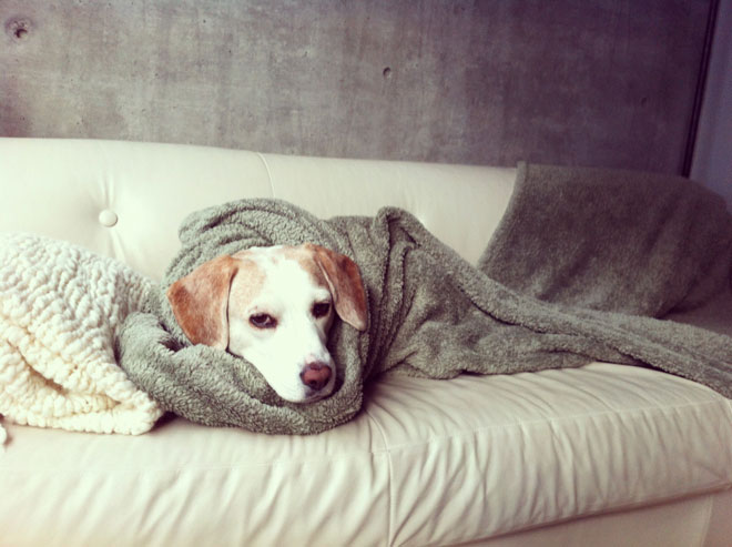 JUNE 06, 2012 - RALPHY IN A BLANKET