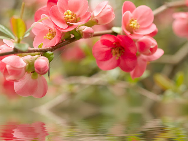 : Flowers Wallpapers, Flowers Animated Wallpaper, Animated Wallpaper