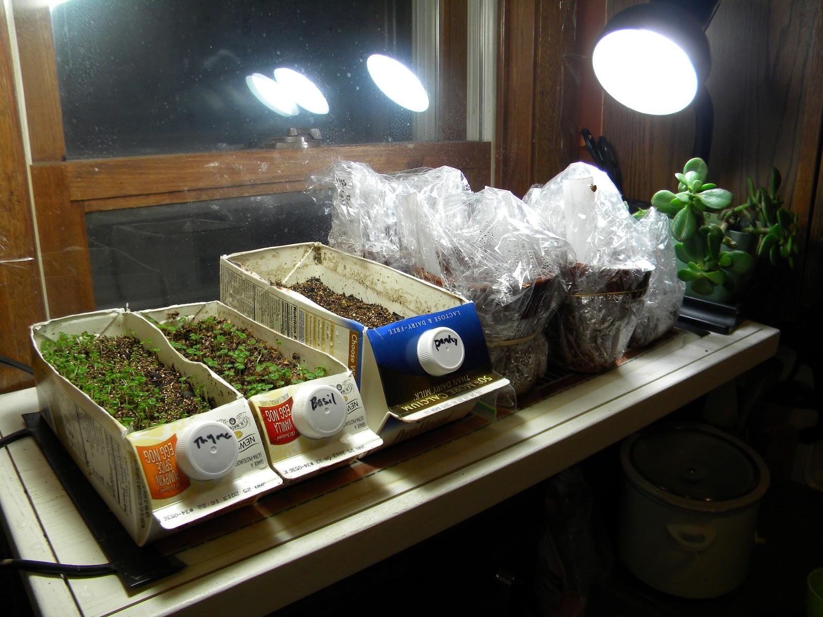 indoor kitchen garden. Recycled Milk Cartons As An Indoor Kitchen Garden D