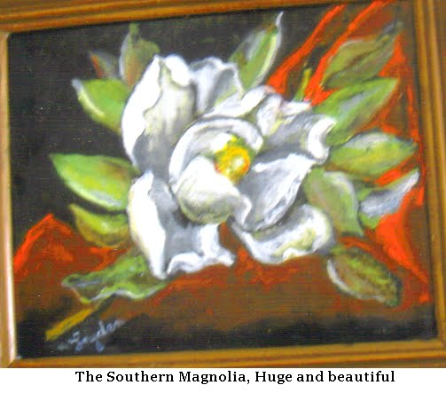Southern Magnolia  #614