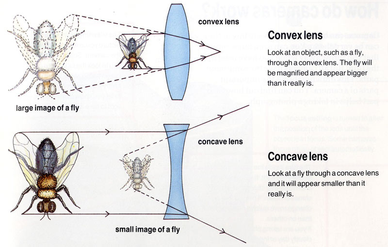 Q & A: Light rays though lenses | Department of Physics ...