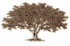 LIBERTY TREE