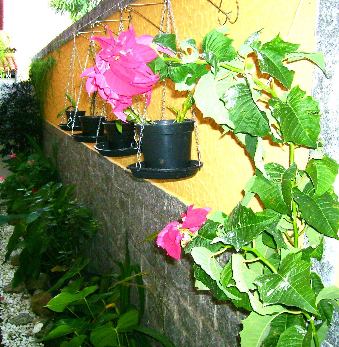 rosas no jardim poema : rosas no jardim poema:Neumar Monteiro: AS FLORES DO JARDIM DA MINHA CASA