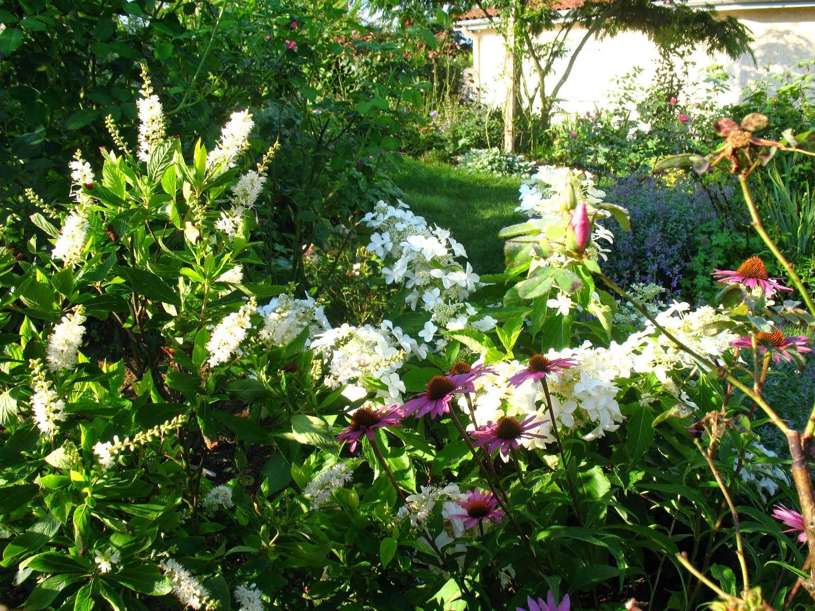 """Hydrangea paniculata """"Levana"""""""