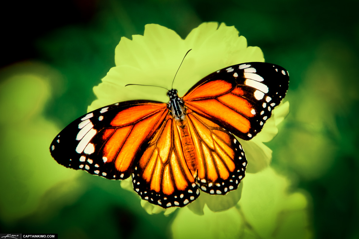 butterfly on yellow color - photo #46