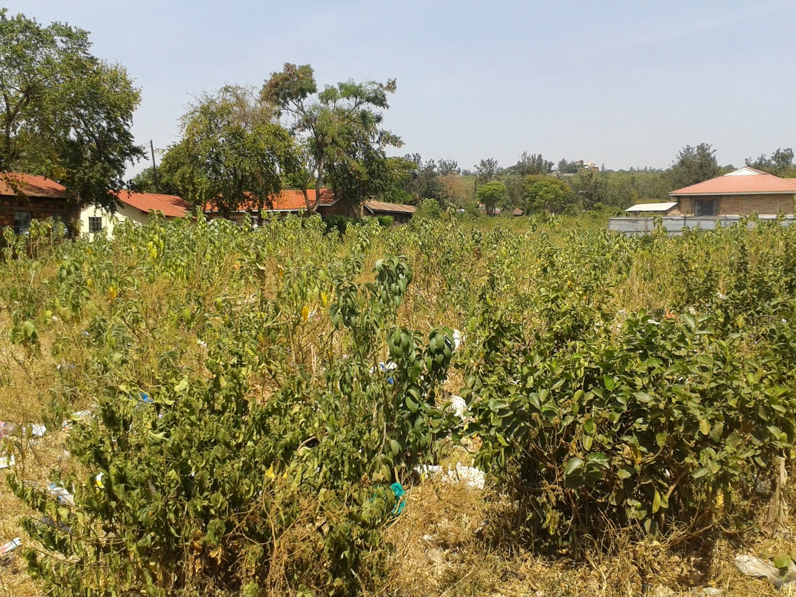 Precautions to take while investing in Kisumu real estate