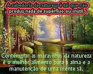 Contemplar a natureza