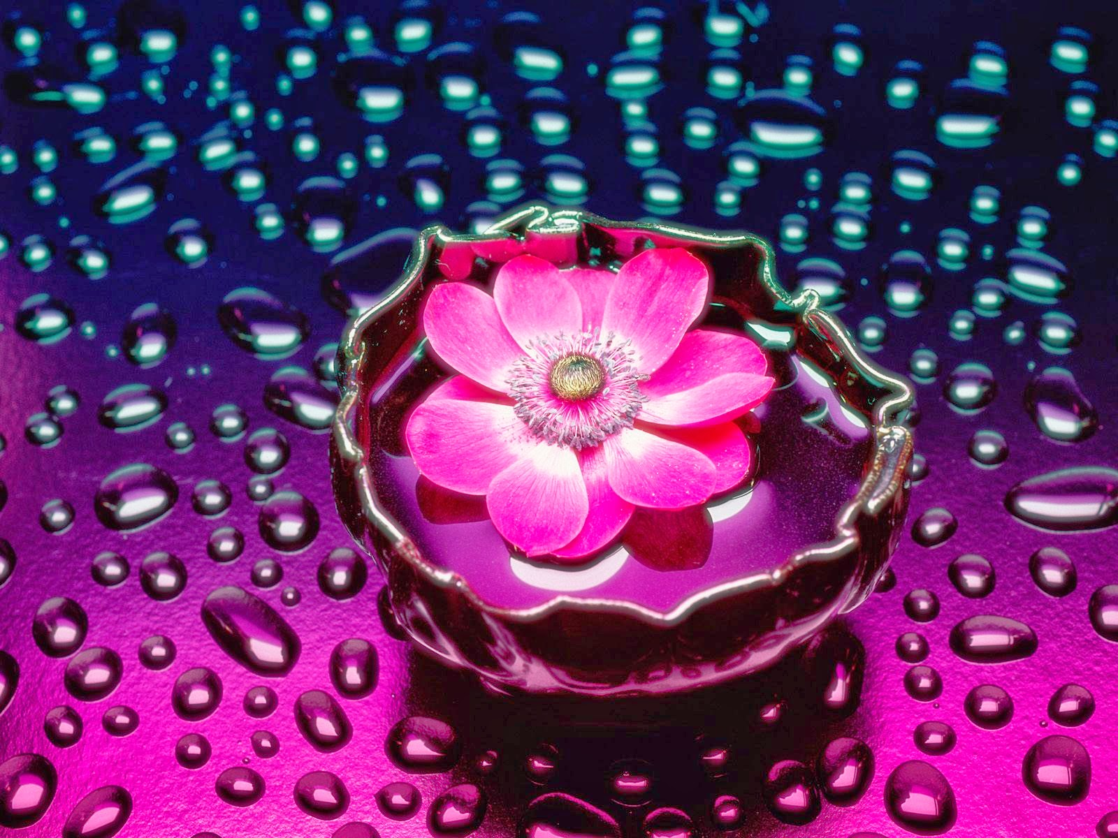 flowers 3d new hd wallpapers wallpapers