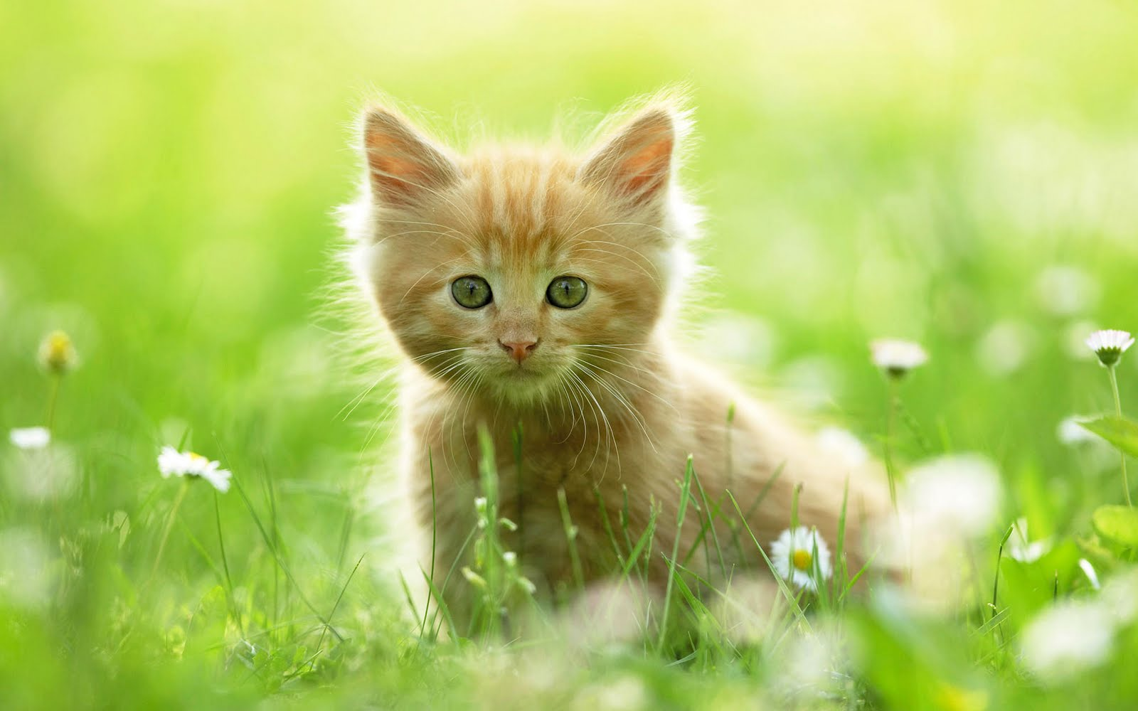 wallpapers fair: amazing fun cute cat wallpaper hd image free download