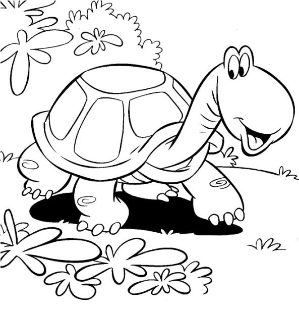 Desenho De Jabuti Para Imprimir Desenhos Infantil Para Download