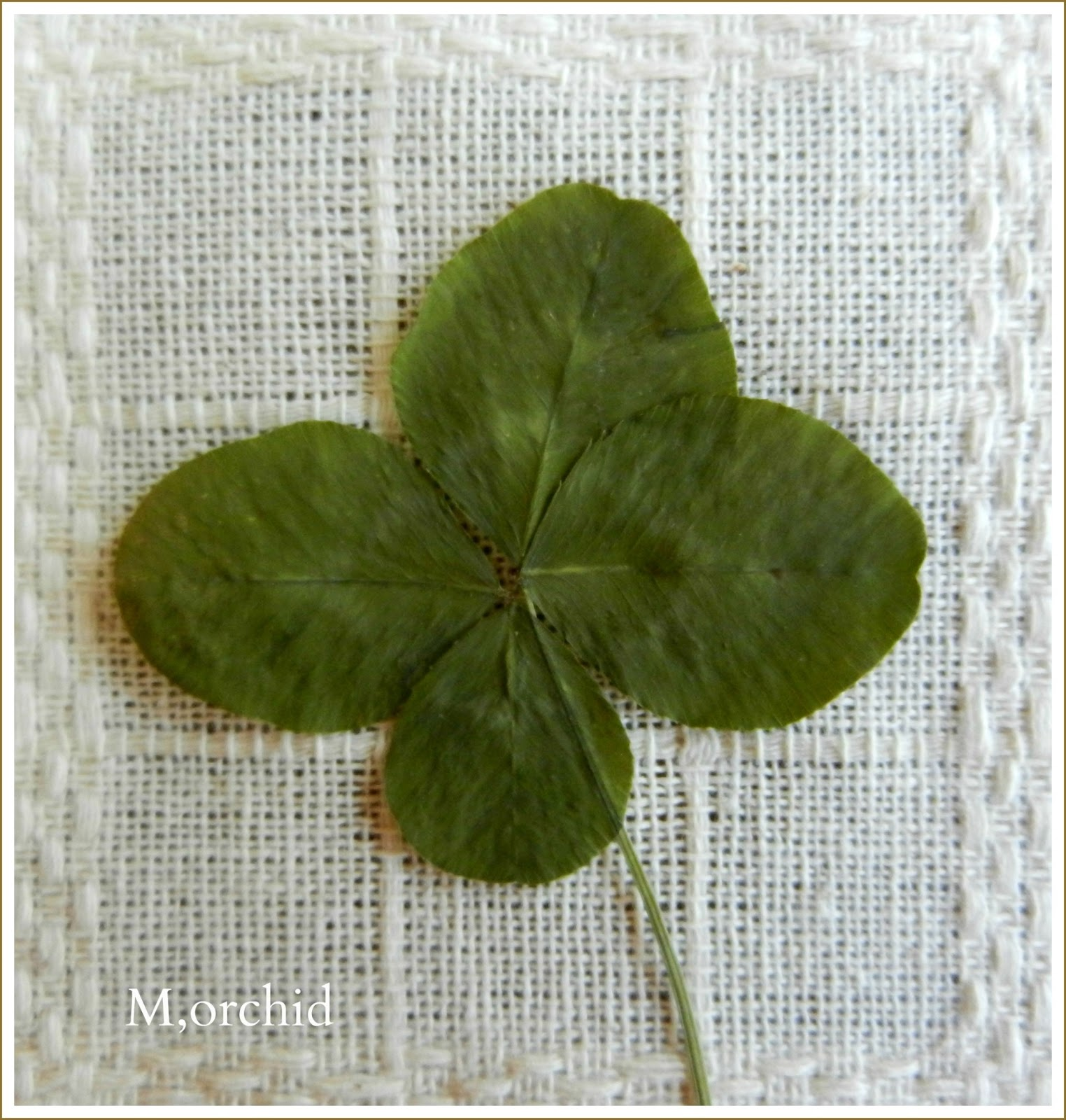 daily mail how to find a four leaf clover