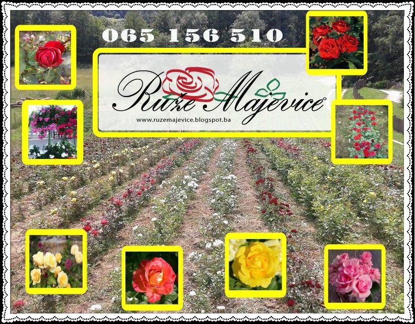 Ruže Majevice za Vas