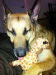 My Granddog Sam