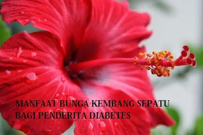 Manfaat Bunga Kembang Sepatu Bagi Penderita Diabetes