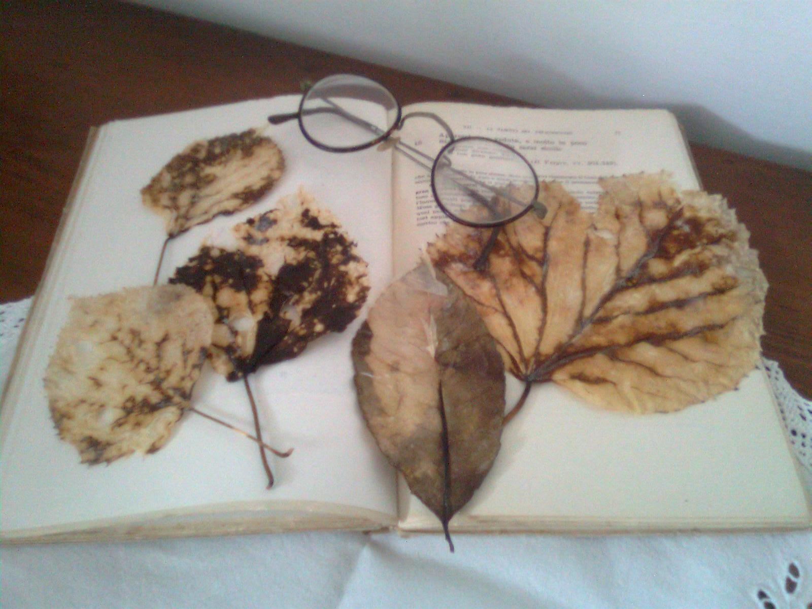 Laboratorio di zia polly foglie morte portate a nuova vita - Mia suocera in bagno ...