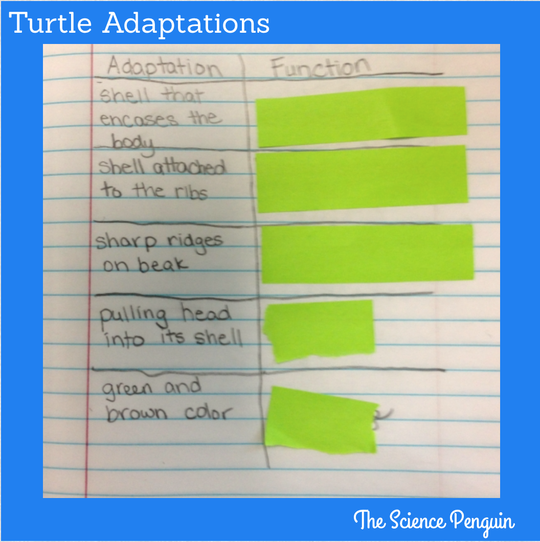 Time To Teach  Animal Adaptations  U2014 The Science Penguin