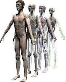 عشر حقائق مذهلة عن الجسم البشري ستعرفها لأول مرة !!