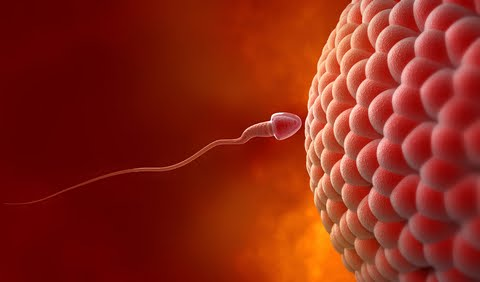 Cause of unexplained infertility discovered for 80% of couples world wide