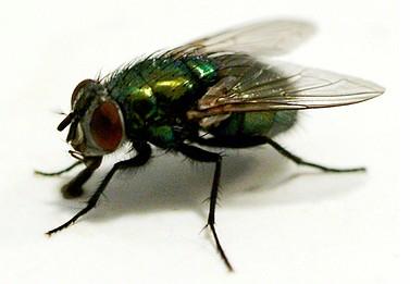 http://2.bp.blogspot.com/-fIHCMeEFkso/TXRphRDSACI/AAAAAAAAFRo/fnmNNCqqhzU/s1600/lalat.jpg