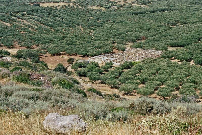 Oliveraies près de Falasarna (Crète, Grèce)
