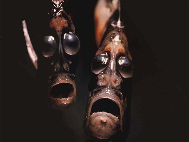Peces Extraños Del Fondo Del Mar