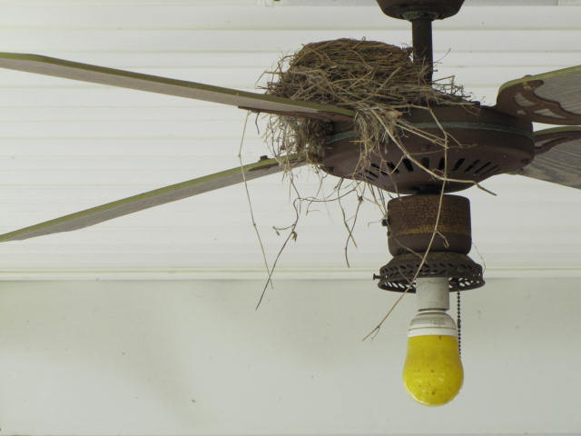 how to keep birds off my porch