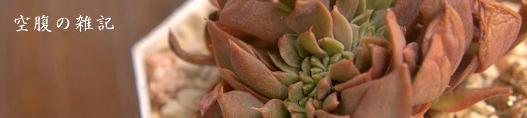 空腹の雑記 多肉植物Blog