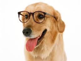 My Dog Keeps Rubbing His Eye