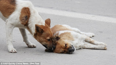 dog3 Photo Updates: Dog Tries To Revive His Dead Mate Imagine