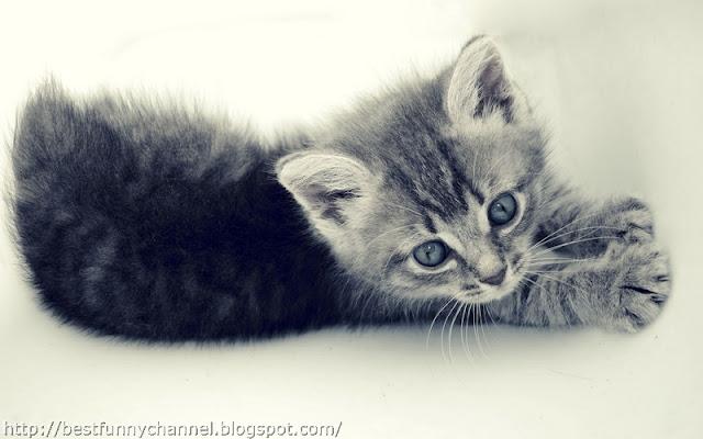 Small kitten.