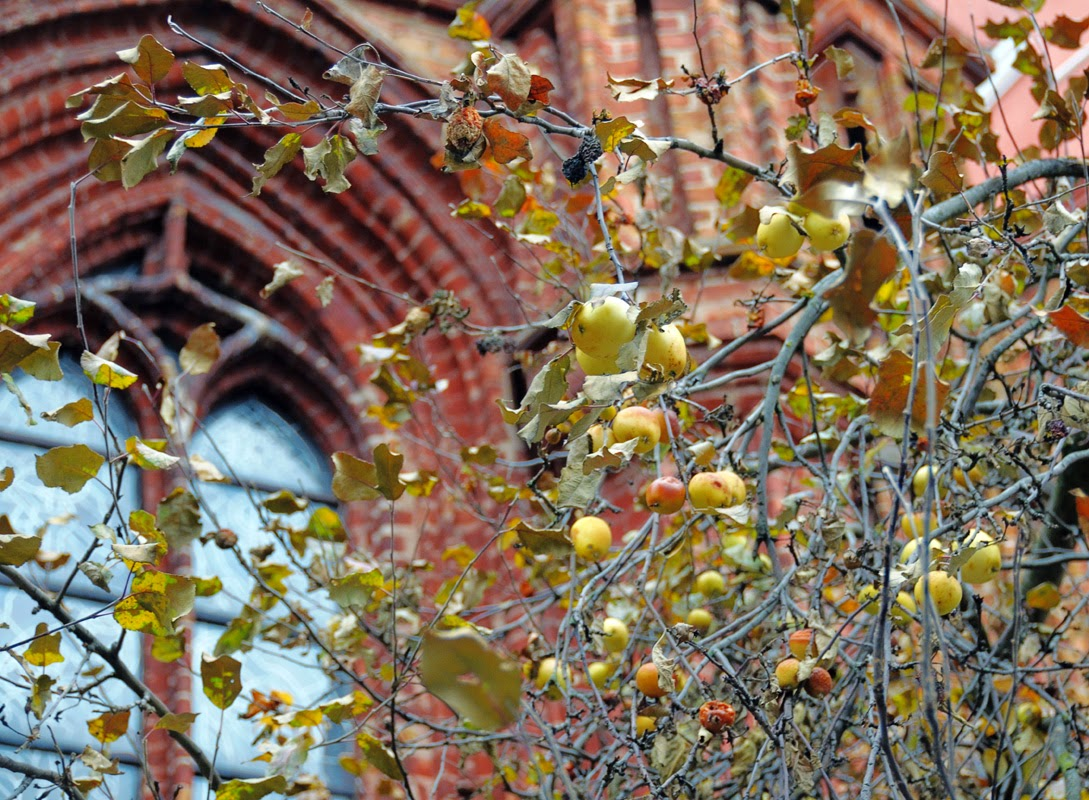 Костел Святой Анны. Яблоки на фоне окна. Вильнюс, Литва. Осень Выходные Прогулка по городу достопримечательности фотографии рестораны национальной кухни блошиные рынки