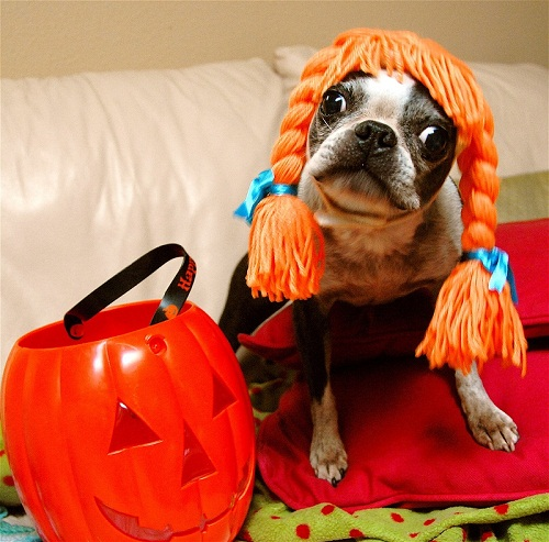 large dog halloween costume ideas funny small large dog halloween costumes ideas happy