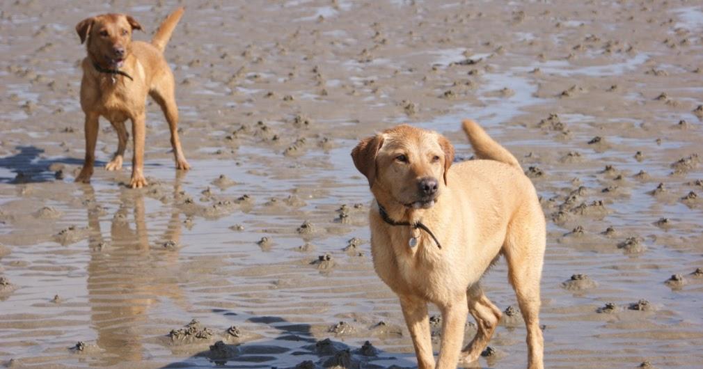 Dog Friendly Pubs Scottish Borders