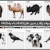 موقع يقدّم صور عالية الدّقة بصيغة PNG