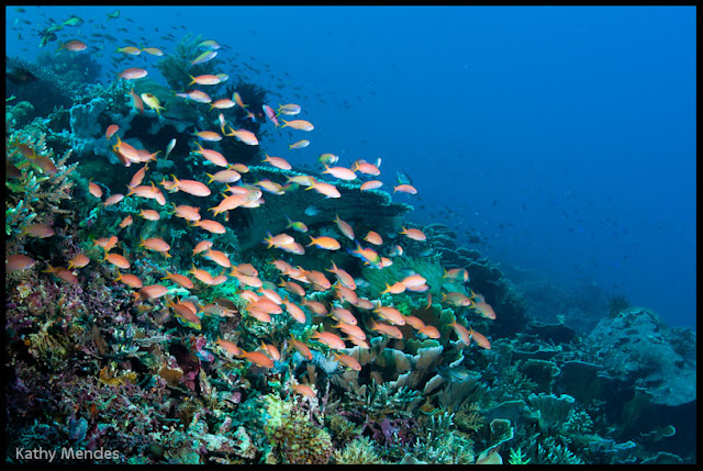 Top 10 The Best Dive Sites In Southeast Asia