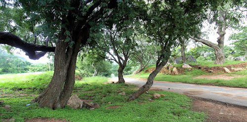 Road from Bevanatham to Denkanikottai Tamil Nadu