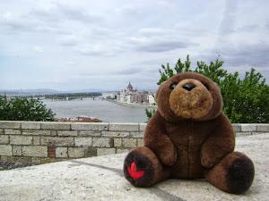 Teddy Bear in Budapest