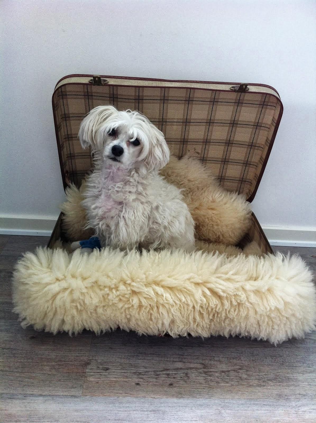 Hunden vår TEO