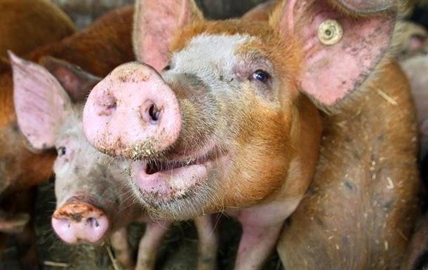 * так пусть же безвестная судьба этой замечательной свиньи будет служить нам вечным напоминание о том, что лучше играть в баскетбол, чем...