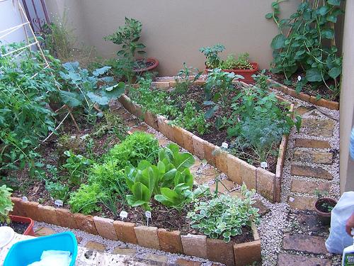 Asociaci n de cultivos taringa for Asociacion de cultivos tomate