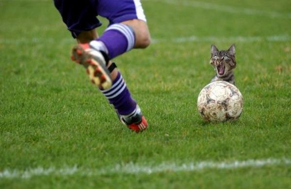 Fotos Divertidas - Funny Pics