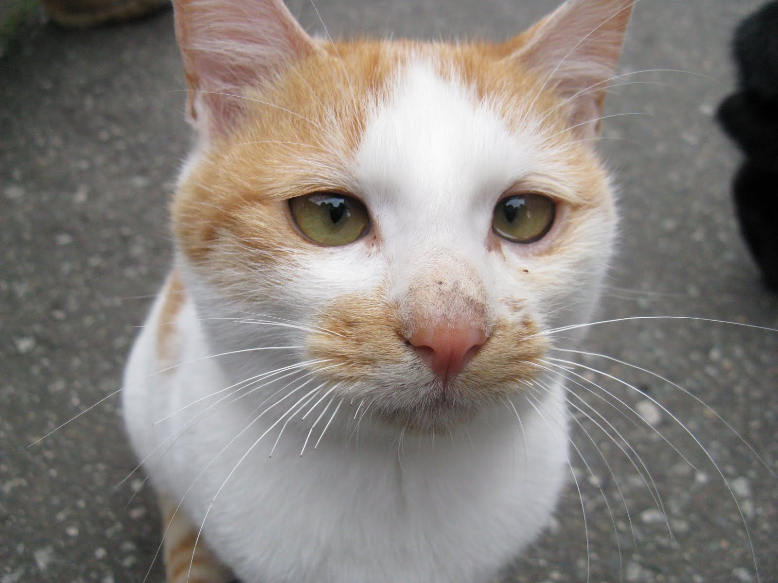 Can Stray Cats Give Dogs Diseases
