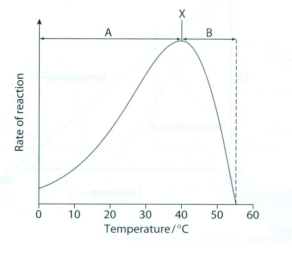 an experiment to determine the effects of temperature in the breakdown of starch by amylase In this experiment, the effect of five different ph's (50, 60, 70, 80, and 90) on the efficiency of an amylase reaction with a starch solution was tested in order to study the general pattern of enzyme efficiency as a result of the ph of the environment.