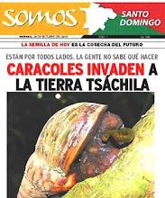 Continua la invasion de Lissachatina fulica en Ecuador